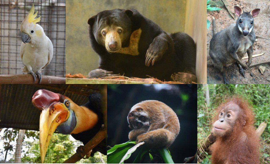 Help the wildlife volunteer cikananga
