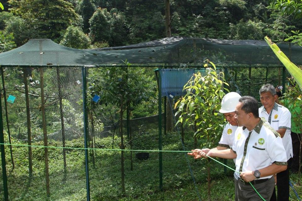 Menteri Kehutanan RI, Bapak H. Zulkifli Hasan SE. MM membuka kandang habituasi untuk melepas burung malaikat putih (Sturnus melanopterus) ke alam bebas