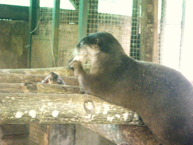 Our new Otter, Mondol