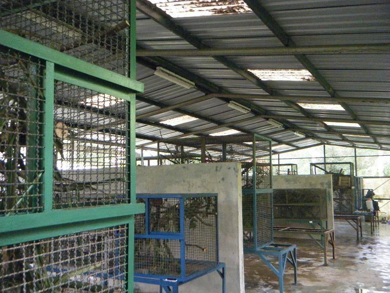 Now the tens of Slow loris now residing in Cikananga Quarantine area.