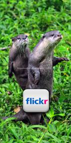 Cikananga Wildlife Photography