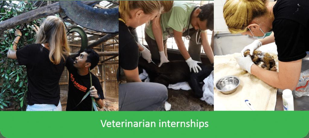 Paraveterinarian veterinarian internship vet intern indonesia