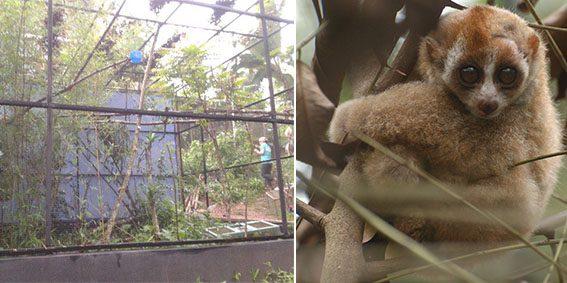 The new Slow loris enclosure