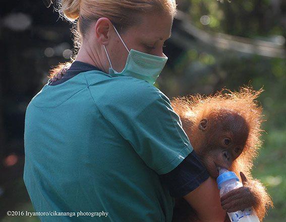 Willemijn Eggen from Wanicare caring the baby of Orangutan