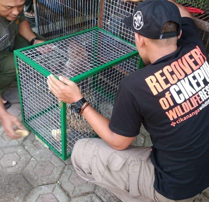 Cikananga-satwa-liar-rescue-animal