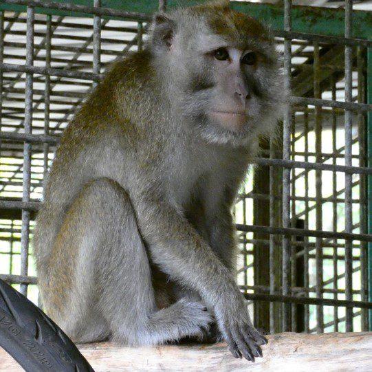 Rescue III CIkananga Wanicare
