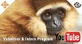 Cikananga Volunteer Youtube