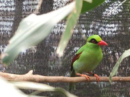 Songnbirds-Cikananga-Mongabay