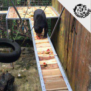 Bear-platforms-2019-Cikananga-Wanicare