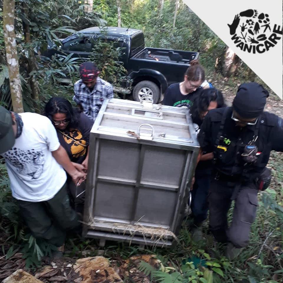 Javan_leopard_Wanicare_Cikananga_rescue_2019
